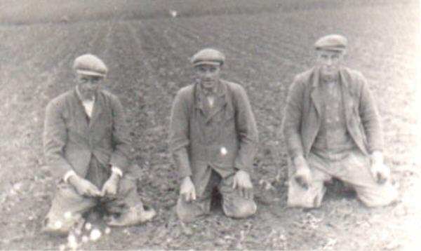 aardappelrooiers